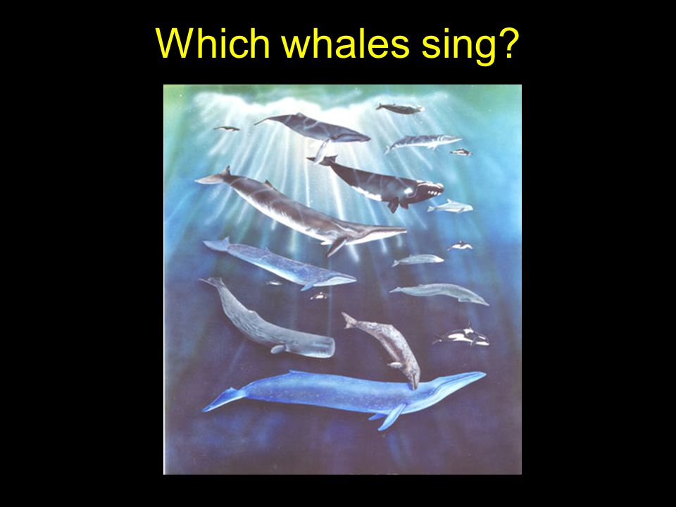 Which whales sing