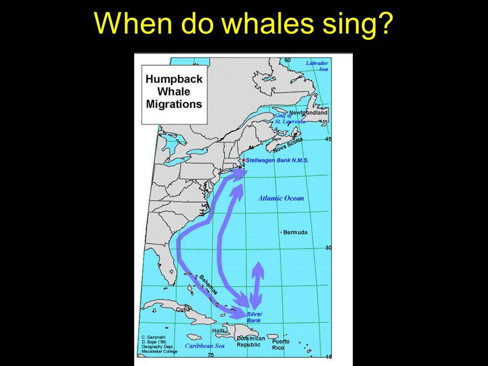 Humpback whale song is not suitable for use as a sonar signal.