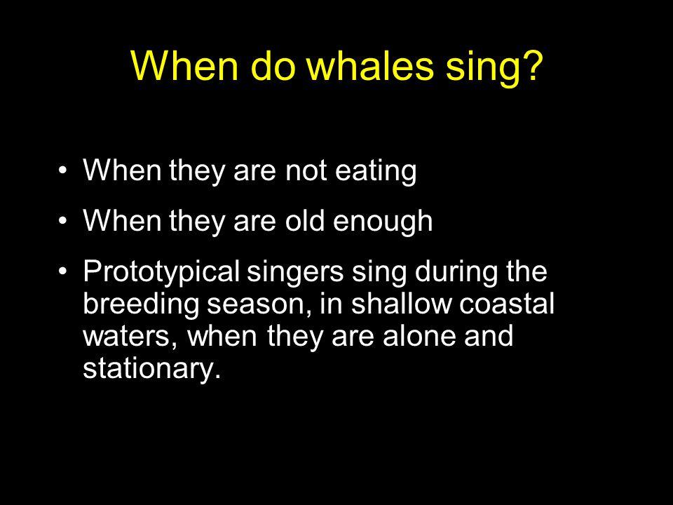 Where do whales sing?