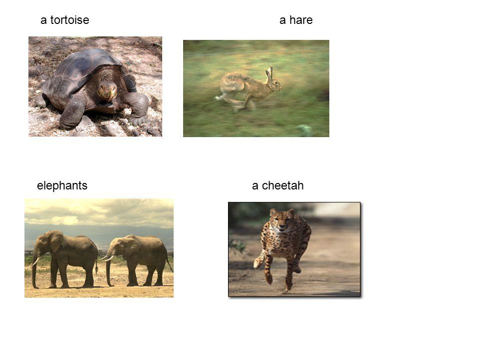 A tortoise is slow.It walks slowly. A hare is quick.