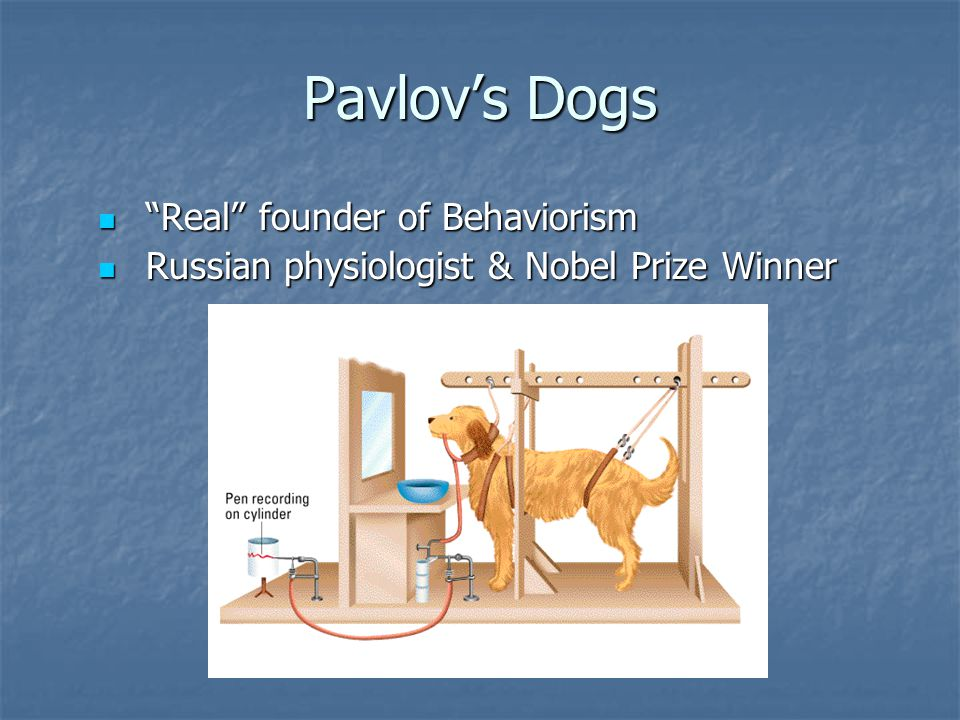 Pavlov's Dogs Real founder of Behaviorism Real founder of Behaviorism Russian physiologist & Nobel Prize Winner Russian physiologist & Nobel Prize Winner