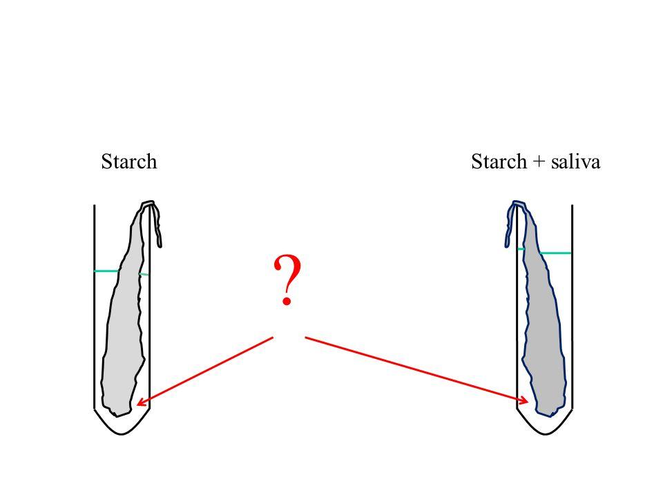 StarchStarch + saliva