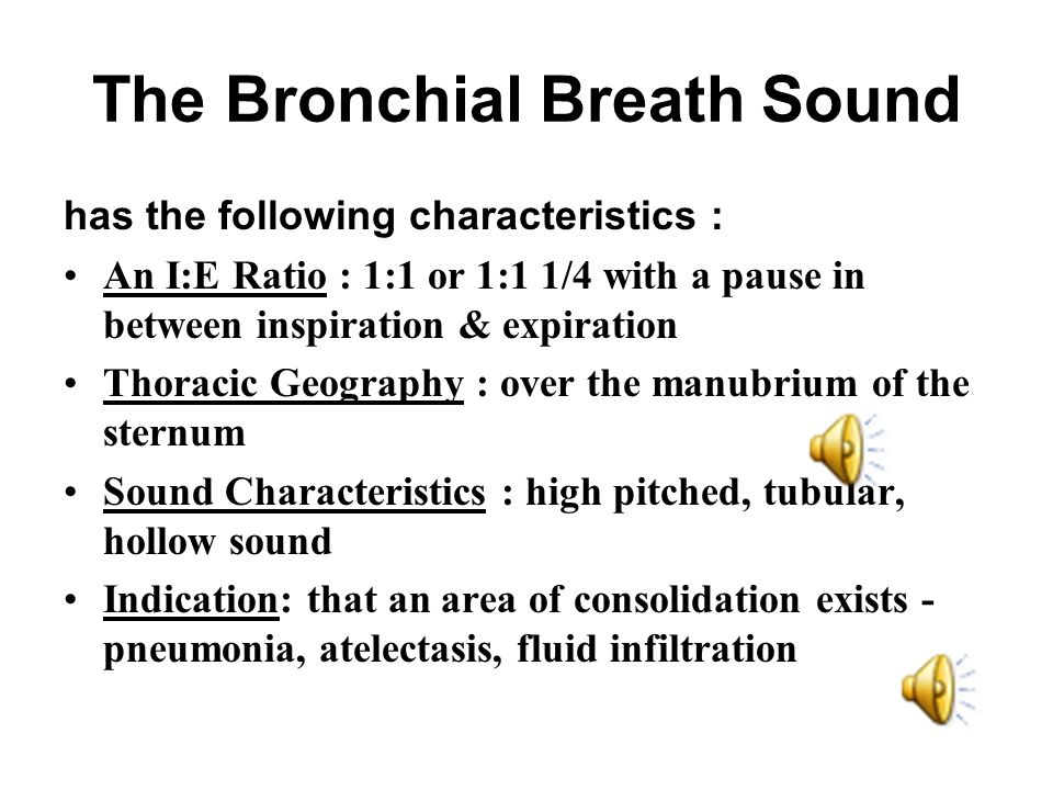 The Bronchial Breath Sound has the following characteristics : An I:E Ratio : 1:1 or 1:1 1/4 with a pause in between inspiration & expiration Thoracic Geography : over the manubrium of the sternum Sound Characteristics : high pitched, tubular, hollow sound Indication: that an area of consolidation exists - pneumonia, atelectasis, fluid infiltration