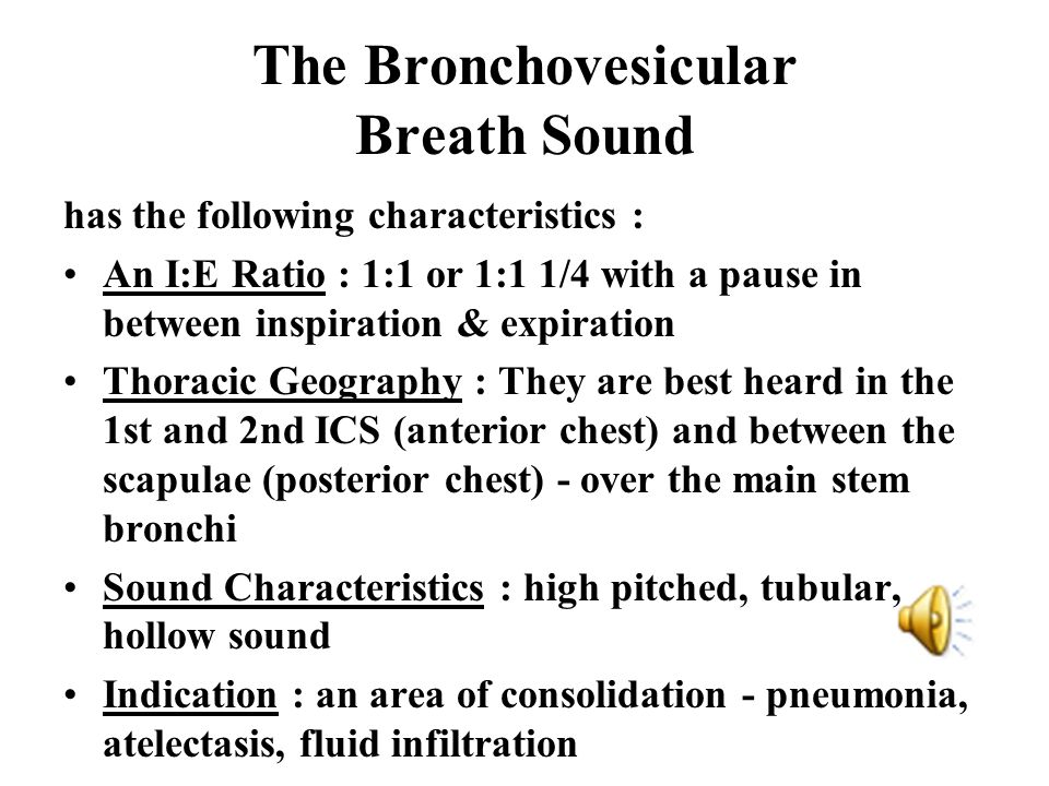 The Bronchovesicular Breath Sound has the following characteristics : An I:E Ratio : 1:1 or 1:1 1/4 with a pause in between inspiration & expiration T