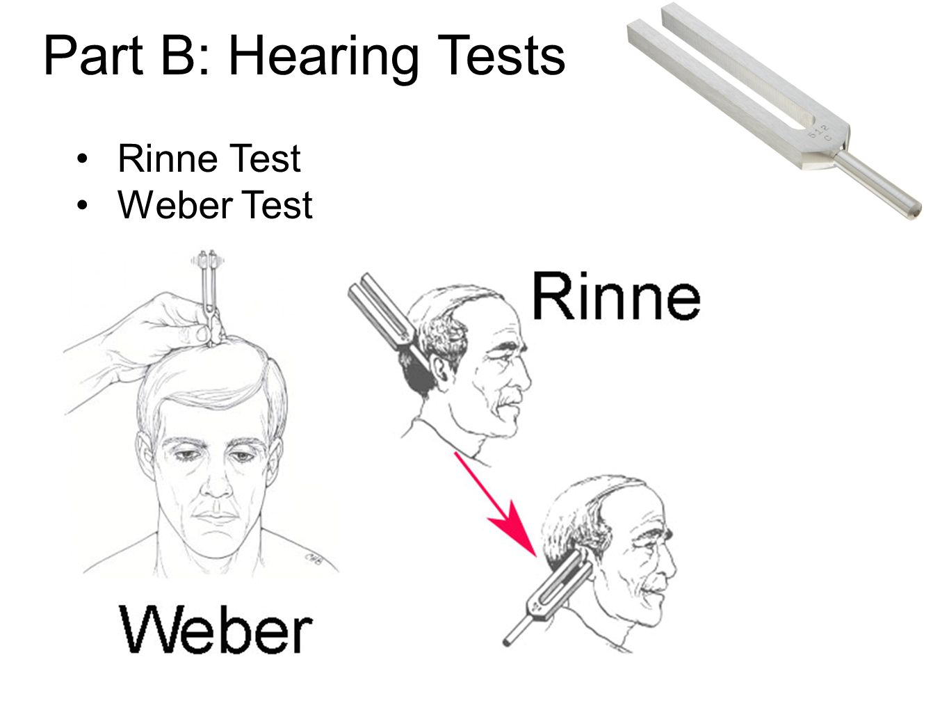 Part B: Hearing Tests Rinne Test Weber Test