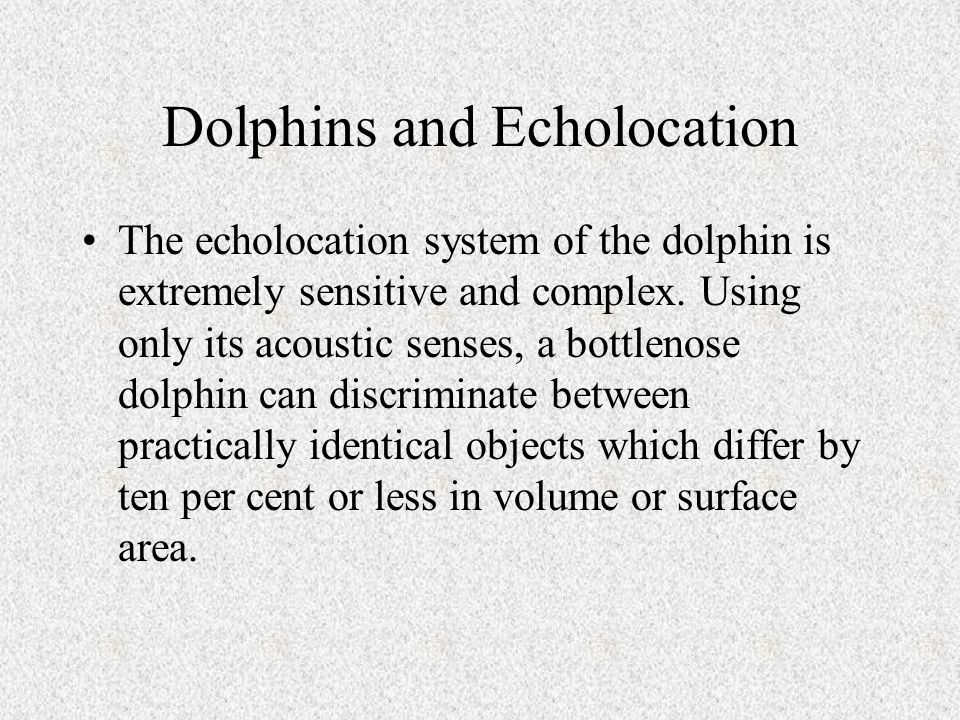 Dolphins and Echolocation The echolocation system of the dolphin is extremely sensitive and complex.