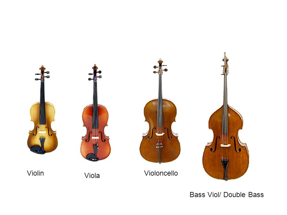 Violin Viola Violoncello Bass Viol/ Double Bass