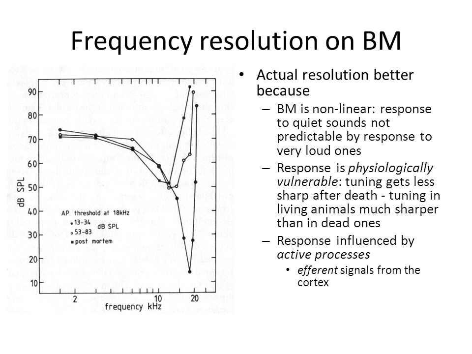 Frequency resolution on BM Actual resolution better because – BM is non-linear: response to quiet sounds not predictable by response to very loud ones – Response is physiologically vulnerable: tuning gets less sharp after death - tuning in living animals much sharper than in dead ones – Response influenced by active processes efferent signals from the cortex