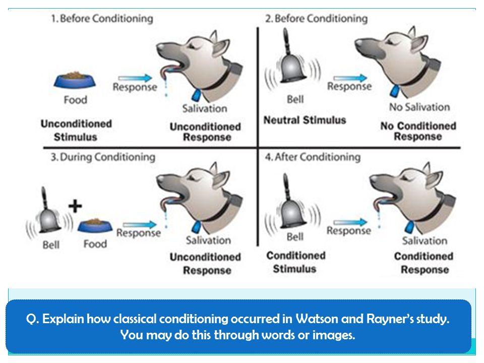 Q. Explain how classical conditioning occurred in Watson and Rayner's study. You may do this through words or images.