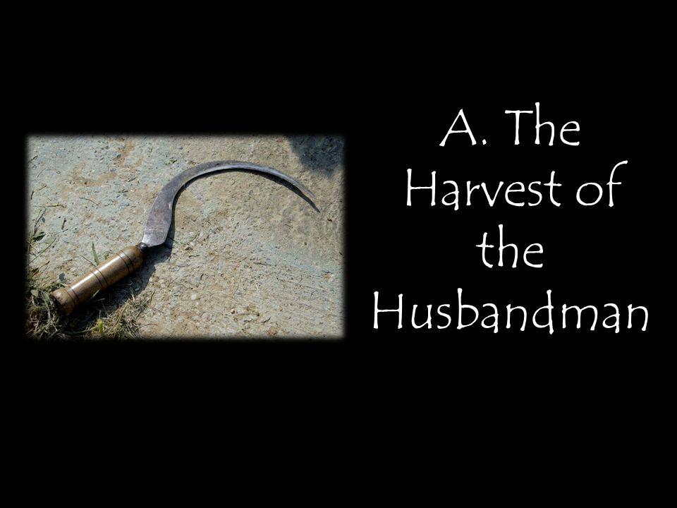 A. The Harvest of the Husbandman