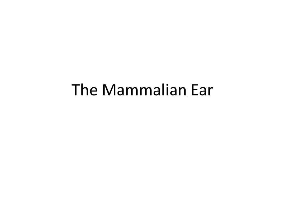 The Mammalian Ear