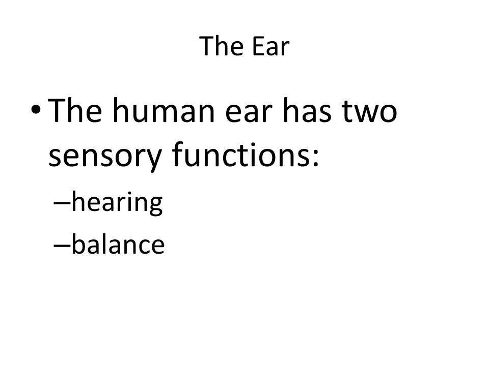 The Ear The human ear has two sensory functions: – hearing – balance