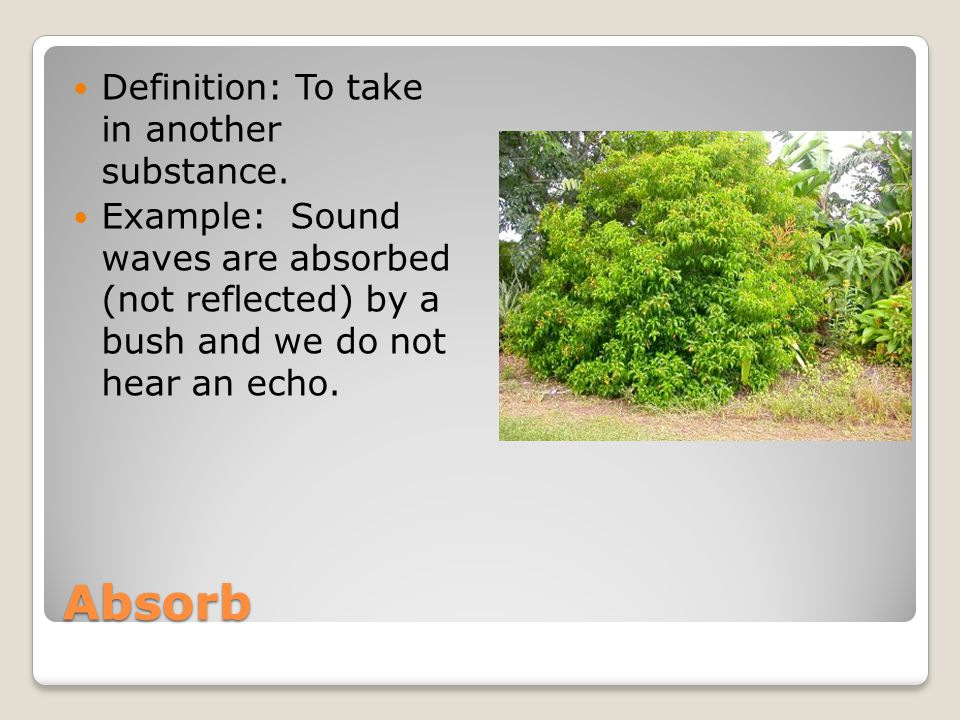 Absorb Definition: To take in another substance.