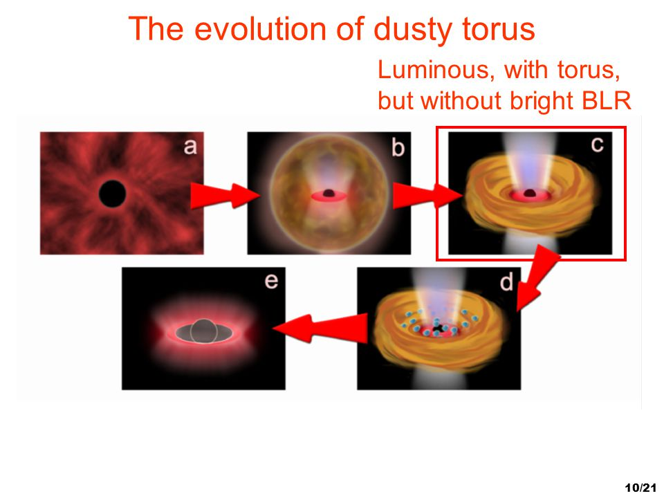 10/21 The evolution of dusty torus Luminous, with torus, but without bright BLR