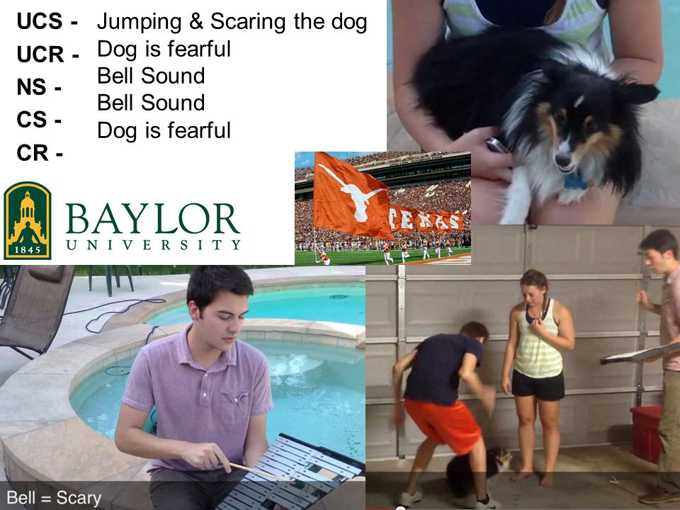 UCS - UCR - NS - CS - CR - Jumping & Scaring the dog Dog is fearful Bell Sound Dog is fearful