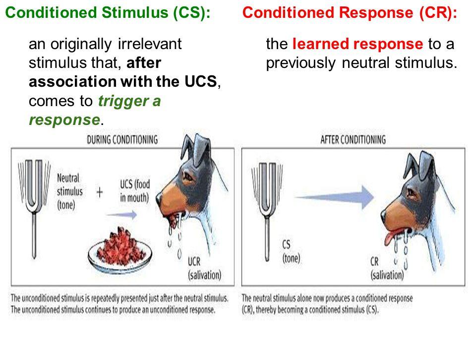 Conditioned Response (CR): the learned response to a previously neutral stimulus. Conditioned Stimulus (CS): an originally irrelevant stimulus that, a