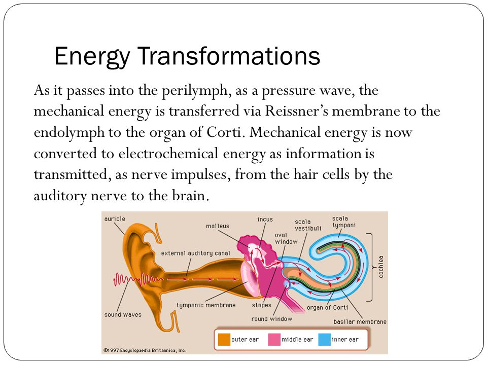 Energy Transformations Lets review what our flow-charts should look like shall we… best-diving.org