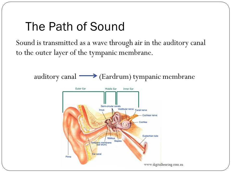 The Path of Sound Vibrations from the tympanic membrane are conveyed through this air-filled chamber via the movement of the interconnecting ear ossicles to the oval window of the inner ear.