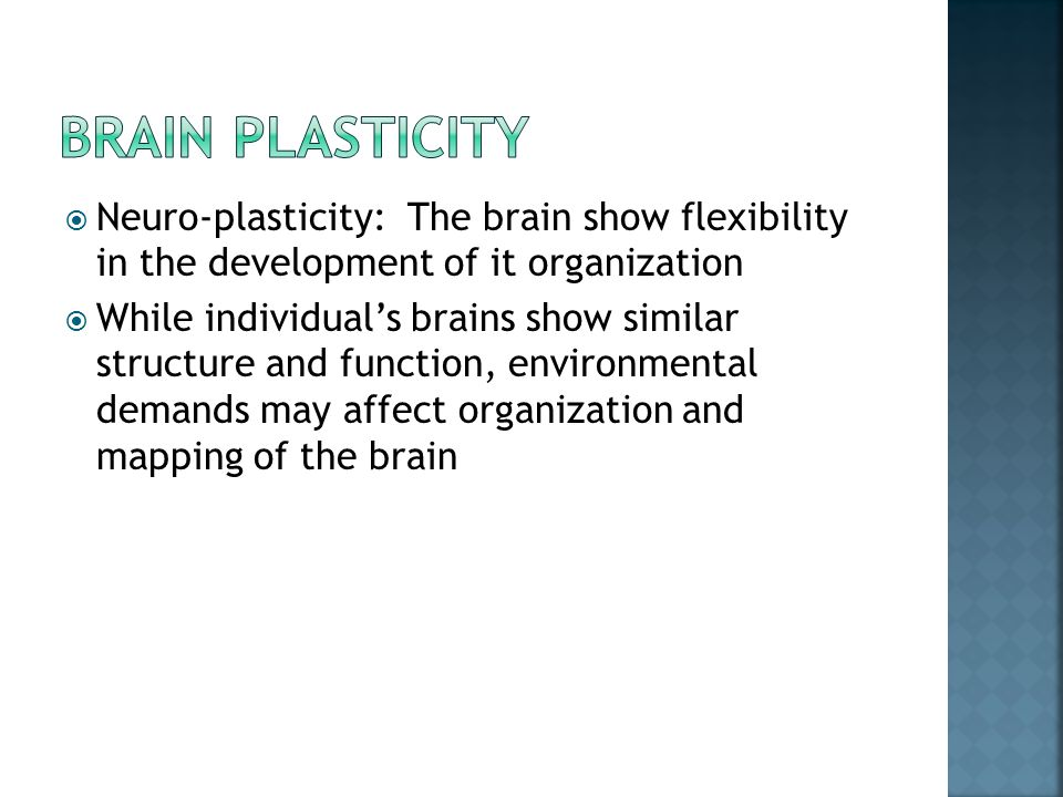  Neuro-plasticity: The brain show flexibility in the development of it organization  While individual's brains show similar structure and function,