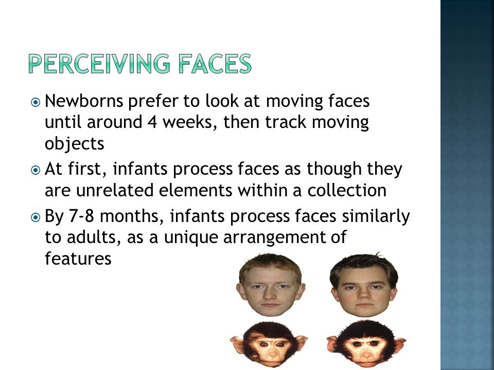  Newborns prefer to look at moving faces until around 4 weeks, then track moving objects  At first, infants process faces as though they are unrelat