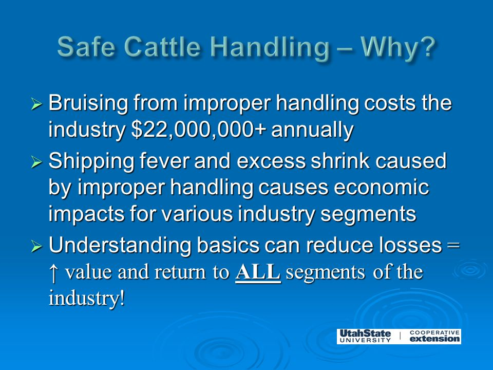  Bruising from improper handling costs the industry $22,000,000+ annually  Shipping fever and excess shrink caused by improper handling causes economic impacts for various industry segments  Understanding basics can reduce losses = ↑ value and return to ALL segments of the industry!