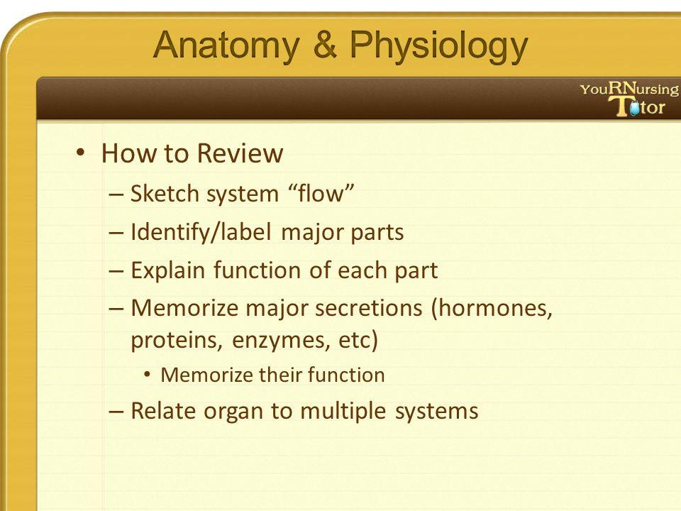 """How to Review – Sketch system """"flow"""" – Identify/label major parts – Explain function of each part – Memorize major secretions (hormones, proteins, enz"""