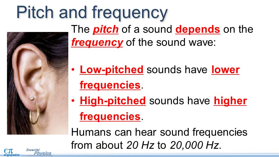Humans can hear sound frequencies from about 20 Hz to 20,000 Hz. Pitch and frequency The pitch of a sound depends on the frequency of the sound wave: