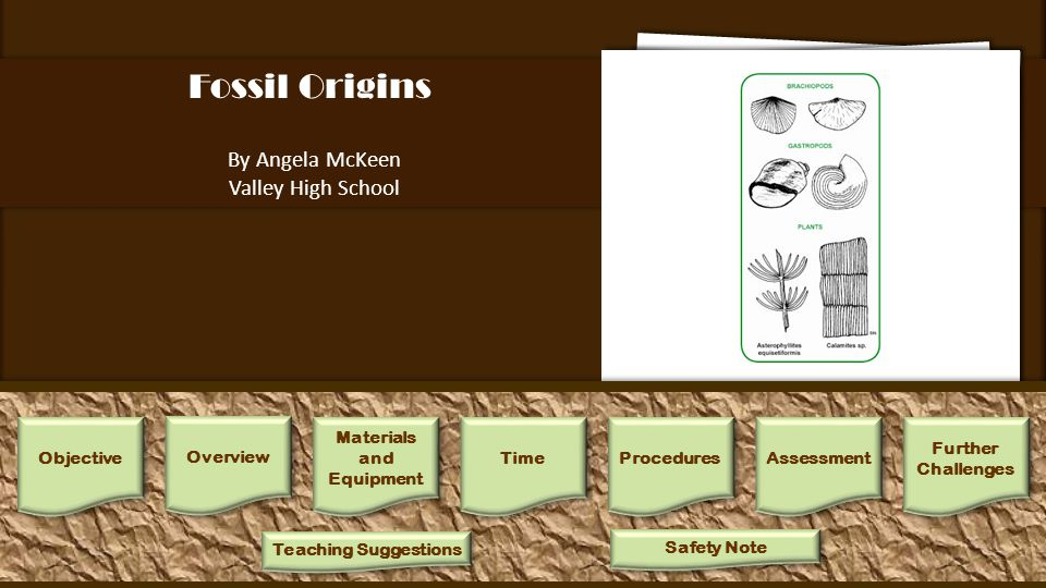 Fossil Origins By Angela McKeen Valley High School 1.Separate fossils into groups that are similar in appearance.