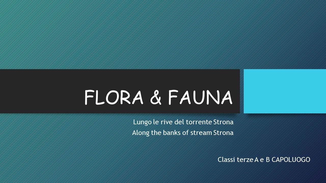 FLORA & FAUNA Lungo le rive del torrente Strona Along the banks of stream Strona Classi terze A e B CAPOLUOGO