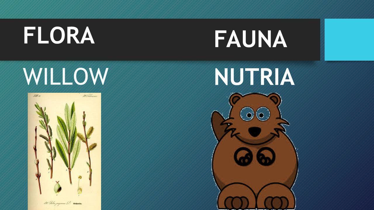 FLORA FAUNA WILLOW NUTRIA