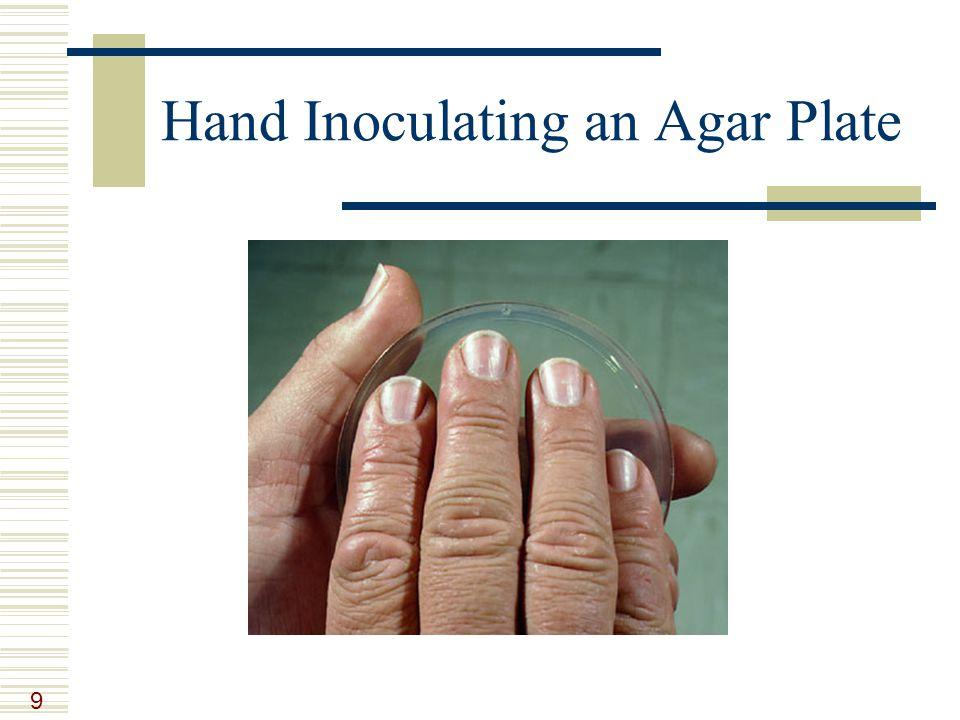 9 Hand Inoculating an Agar Plate