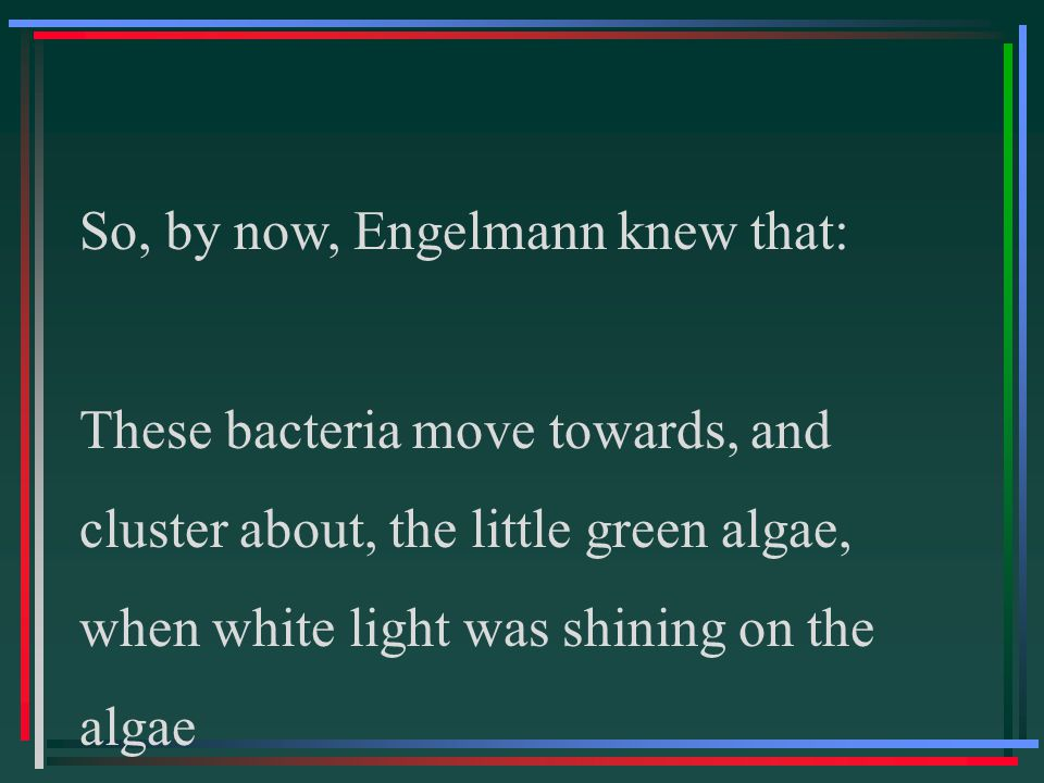 So, by now, Engelmann knew that: These bacteria move towards, and cluster about, the little green algae, when white light was shining on the algae