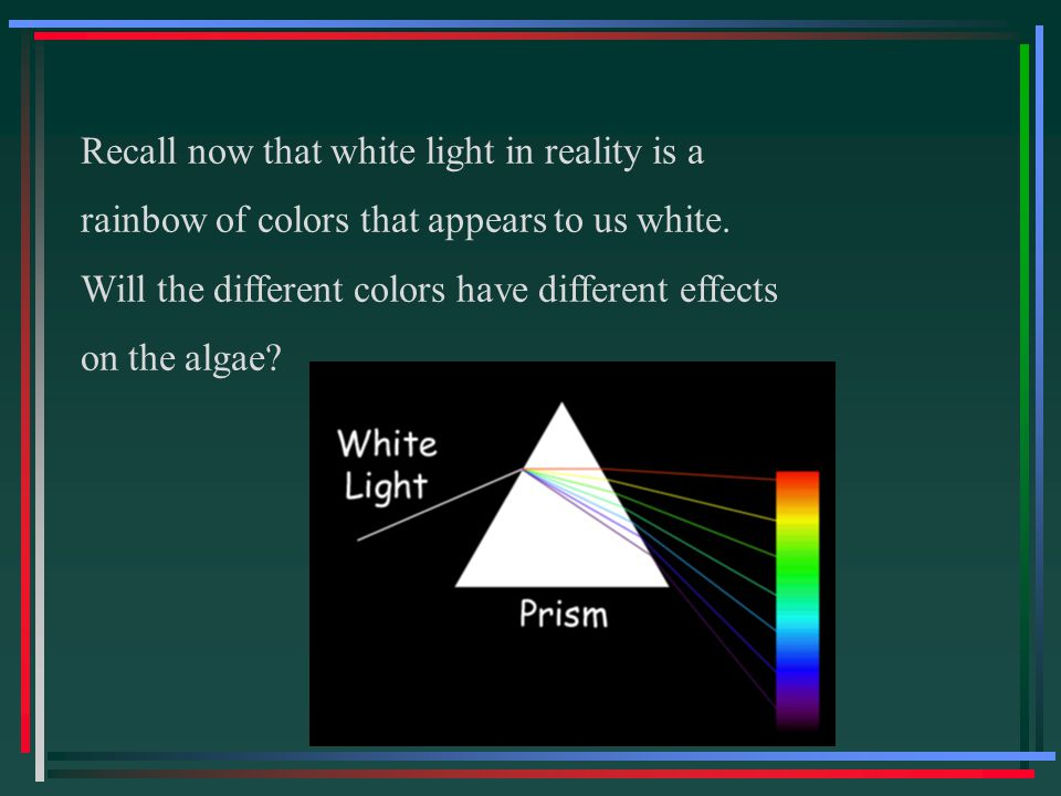 Recall now that white light in reality is a rainbow of colors that appears to us white. Will the different colors have different effects on the algae?