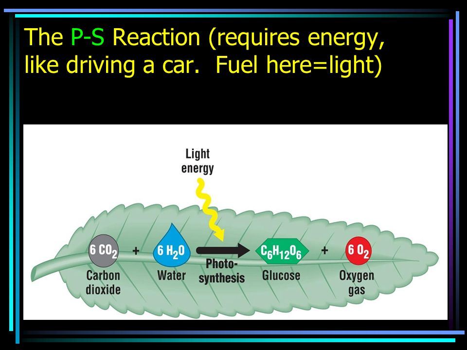 The P-S Reaction (requires energy, like driving a car. Fuel here=light)