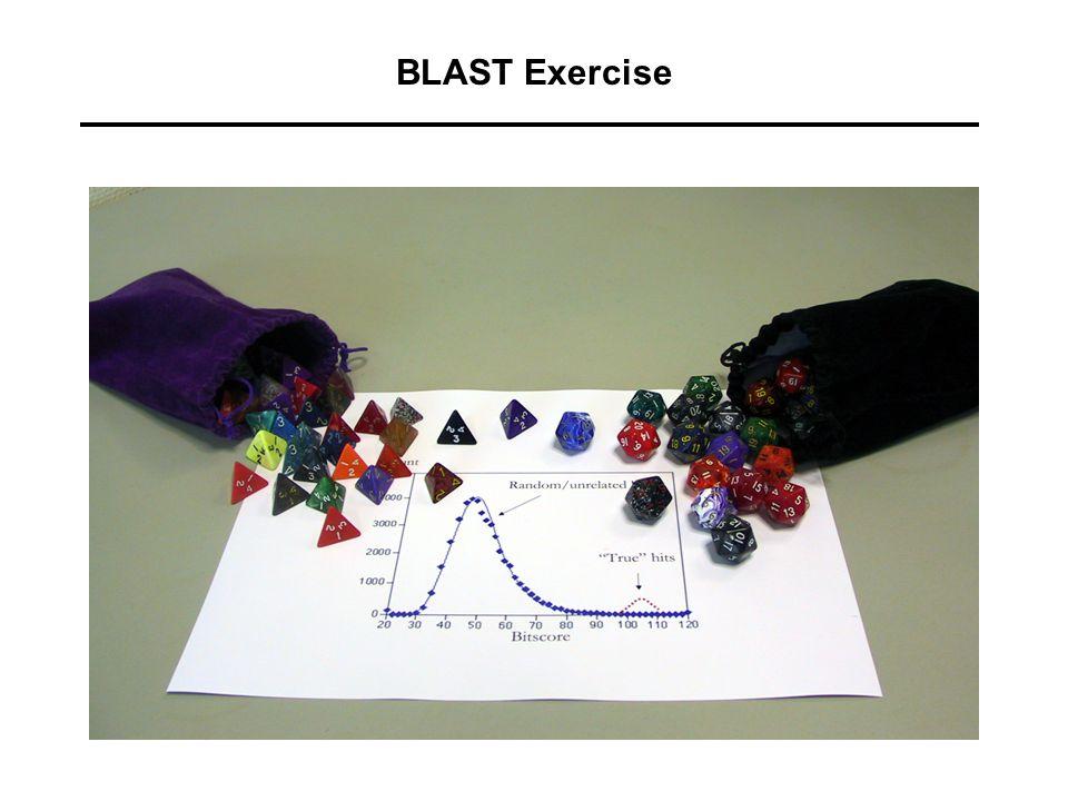 BLAST Exercise