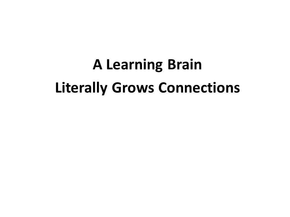 A Learning Brain Literally Grows Connections