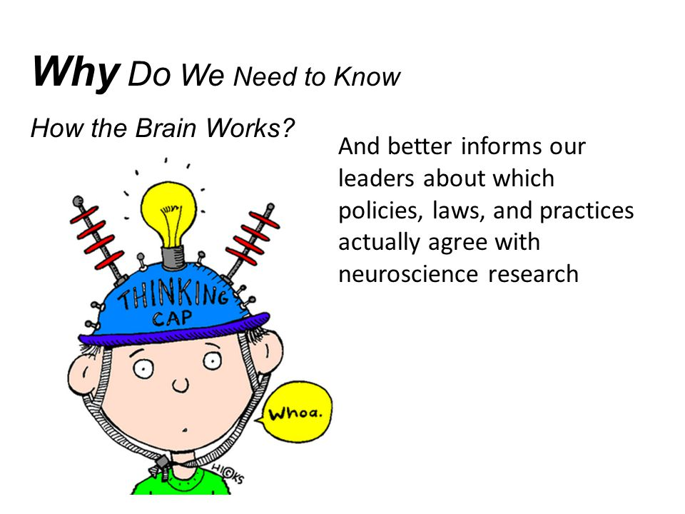 Why Do We Need to Know How the Brain Works.