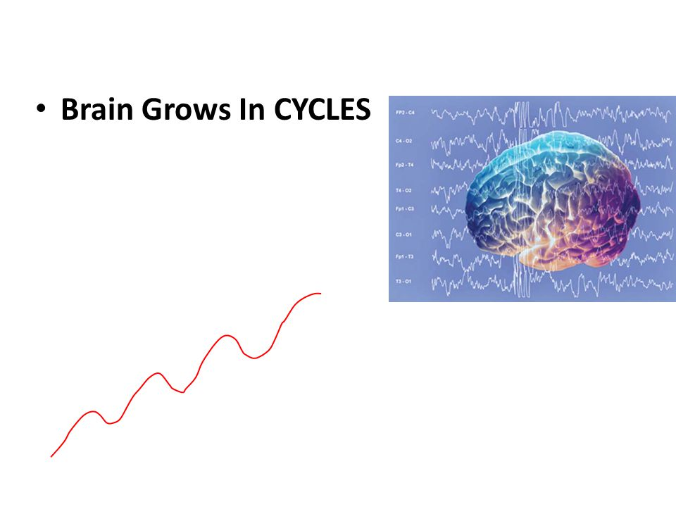 Brain Grows In CYCLES