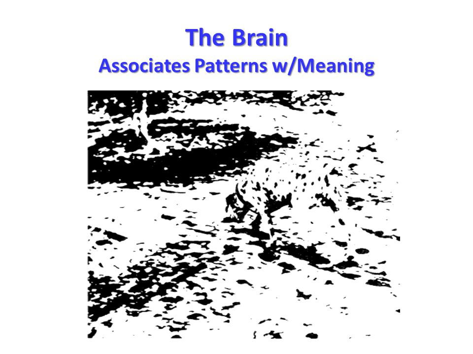 The Brain Associates Patterns w/Meaning