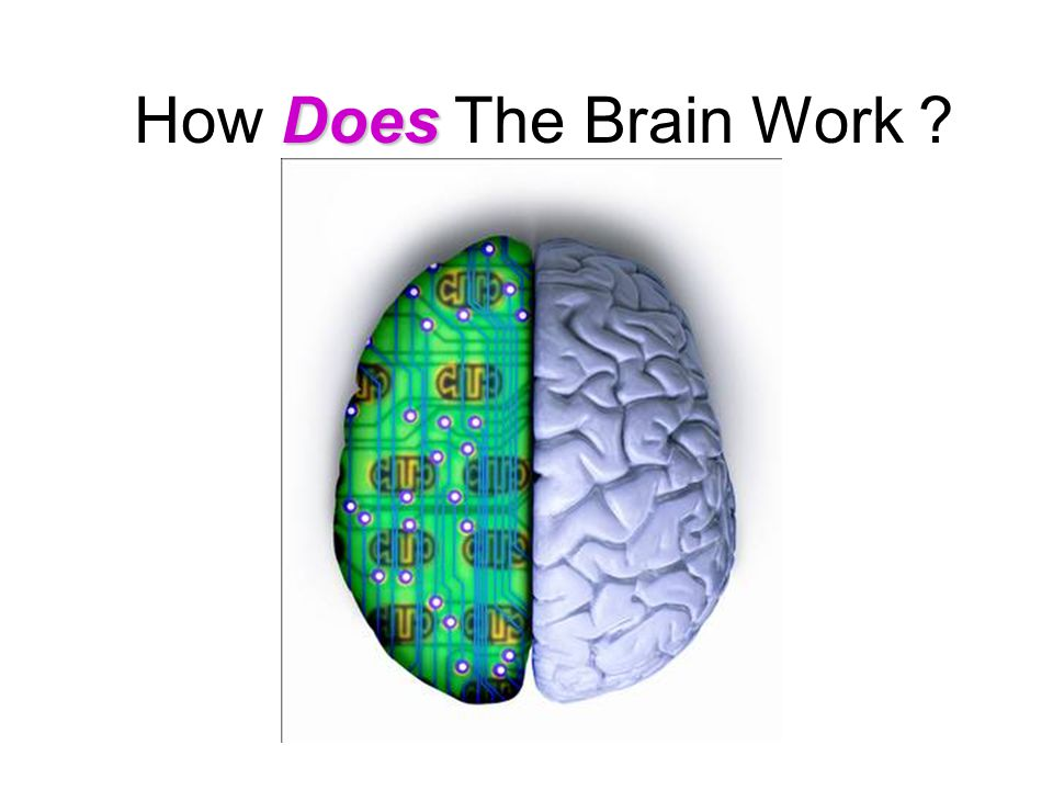 Does How Does The Brain Work