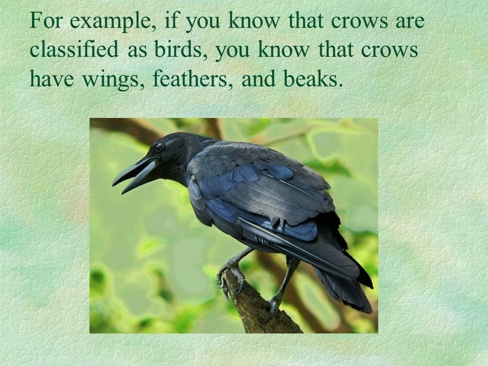 For example, if you know that crows are classified as birds, you know that crows have wings, feathers, and beaks.