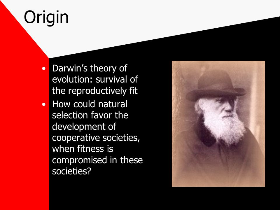 Origin Darwin's theory of evolution: survival of the reproductively fit How could natural selection favor the development of cooperative societies, when fitness is compromised in these societies?