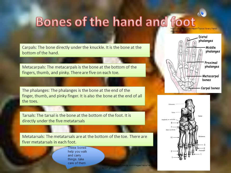 Carpals: The bone directly under the knuckle.It is the bone at the bottom of the hand.