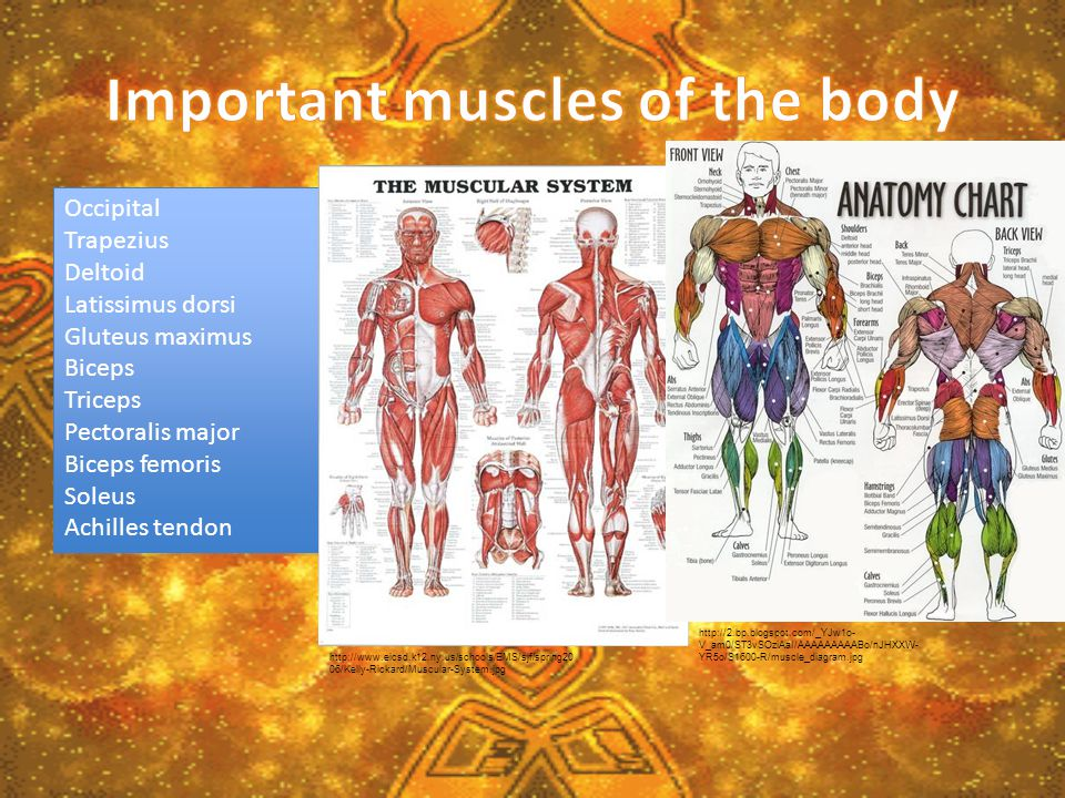 The muscles in your body are extremely important, without them, humans would not have many abilities.
