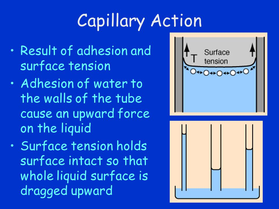 Capillary Action Result of adhesion and surface tension Adhesion of water to the walls of the tube cause an upward force on the liquid Surface tension
