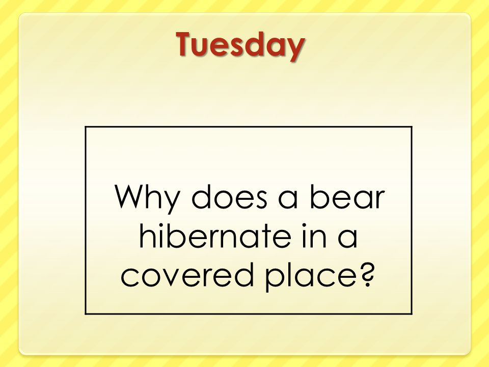 Tuesday Why does a bear hibernate in a covered place?