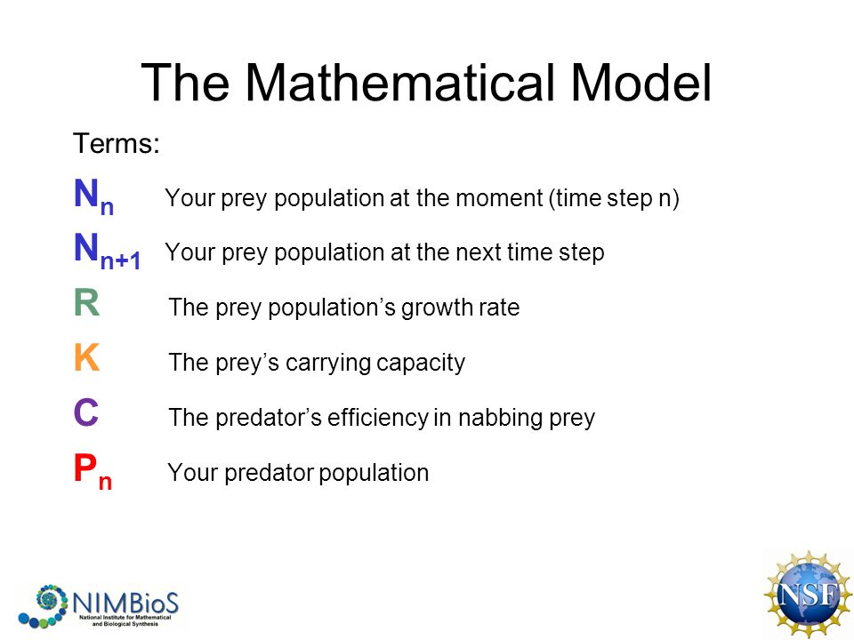 The Mathematical Model Terms: N n Your prey population at the moment (time step n) N n+1 Your prey population at the next time step R The prey population's growth rate K The prey's carrying capacity C The predator's efficiency in nabbing prey P n Your predator population