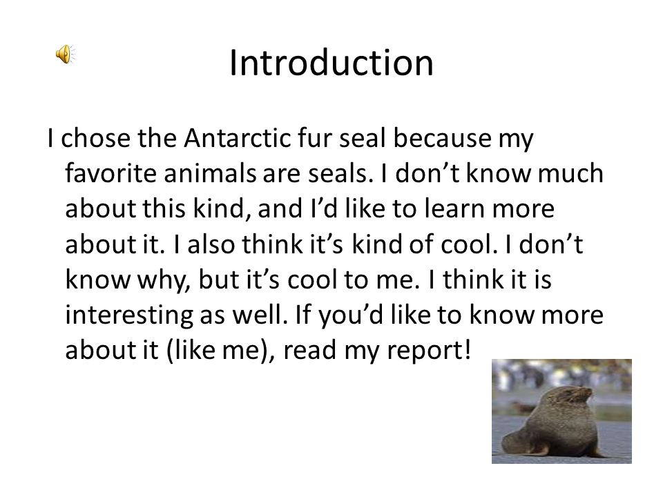 Introduction I chose the Antarctic fur seal because my favorite animals are seals.