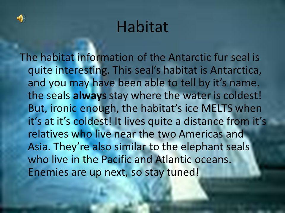 Habitat The habitat information of the Antarctic fur seal is quite interesting.