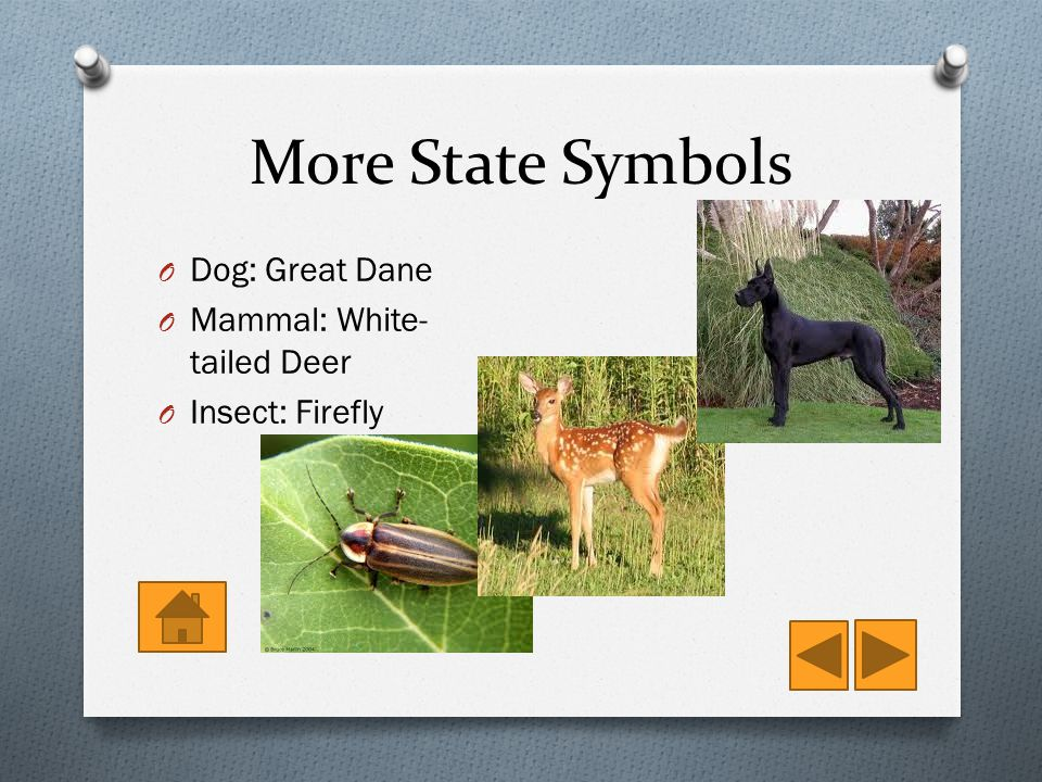 More State Symbols O Dog: Great Dane O Mammal: White- tailed Deer O Insect: Firefly